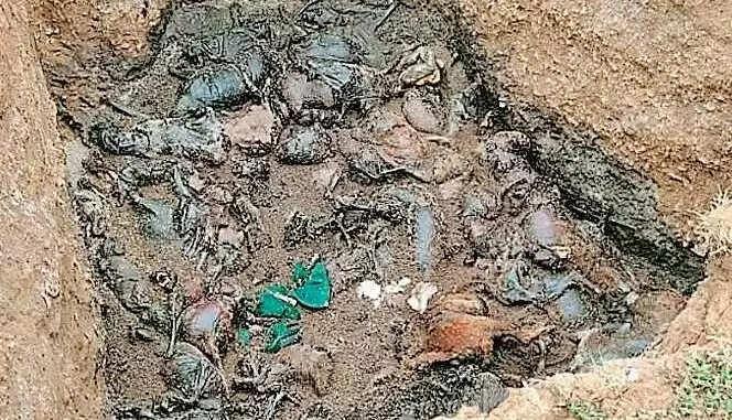 सैकड़ों का जिंदा दफना दिया, अब ग्रामीणों ने खुदायी की तो मचा कोहराम !
