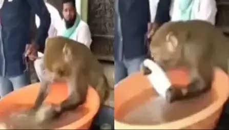 Video : लाॅकडाउन में बंदर को मिल गया चाय की दुकान पर कप-प्लेट धोने का काम